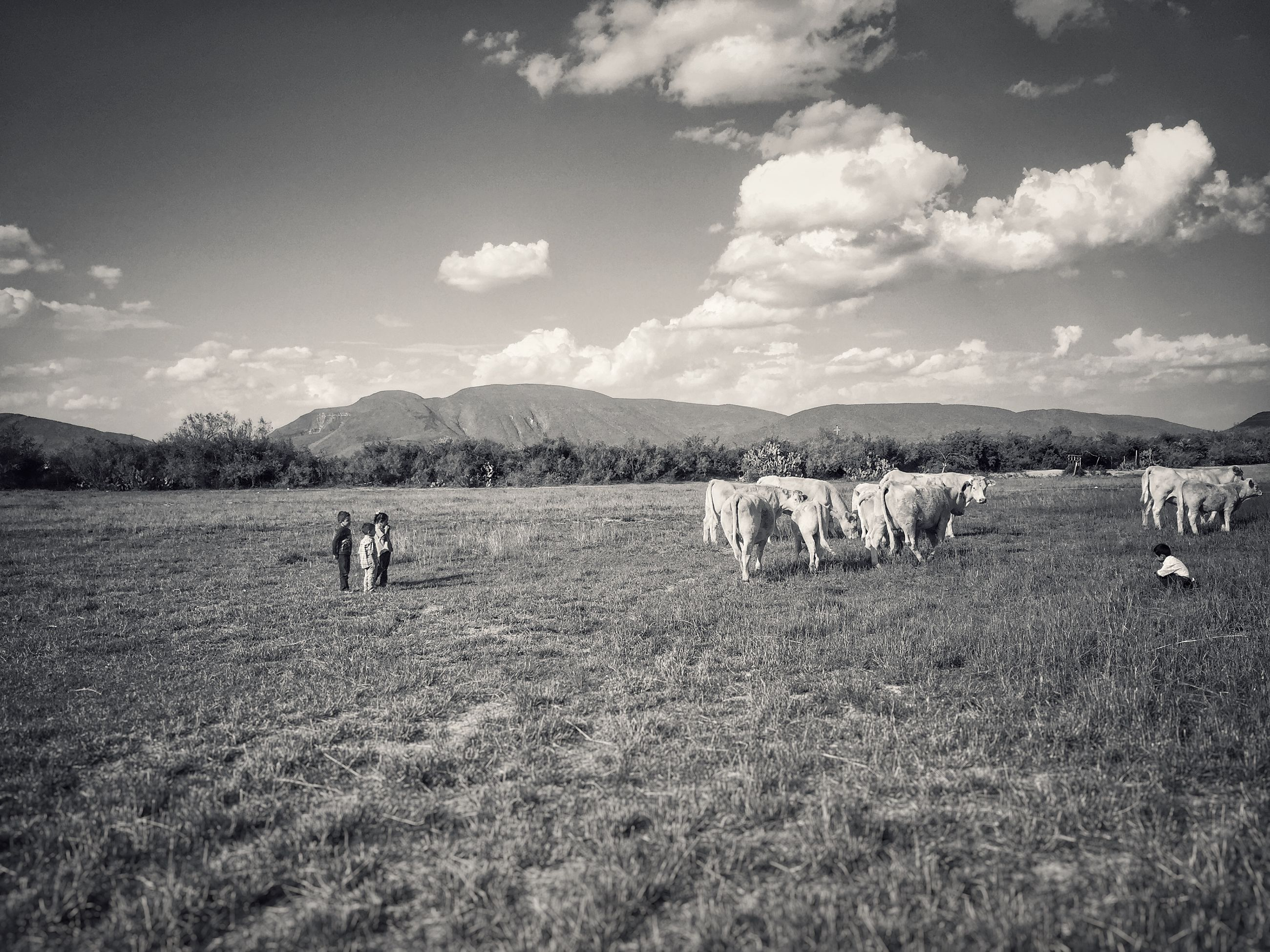 landscape, sky, field, livestock, domestic animals, grass, animal themes, cloud - sky, mammal, rural scene, grazing, nature, tranquil scene, scenics, mountain, tranquility, cow, beauty in nature, horse