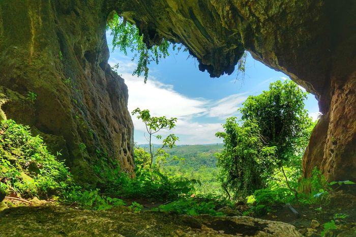 a landscape view through a limestone cave. Photography By Arif Wibowo Photography By @jgawibowo Photography By Jgawibowo Lanscape Landscape_Collection Limestone Cave Limestone INDONESIA Scenic View Scenics Tree Tree Trunk Sky Landscape Grass Plant Green Color Cloud - Sky Cave Natural Arch