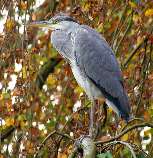 View of a bird perching on tree
