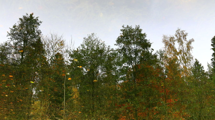Low angle view of bamboo trees in forest against sky