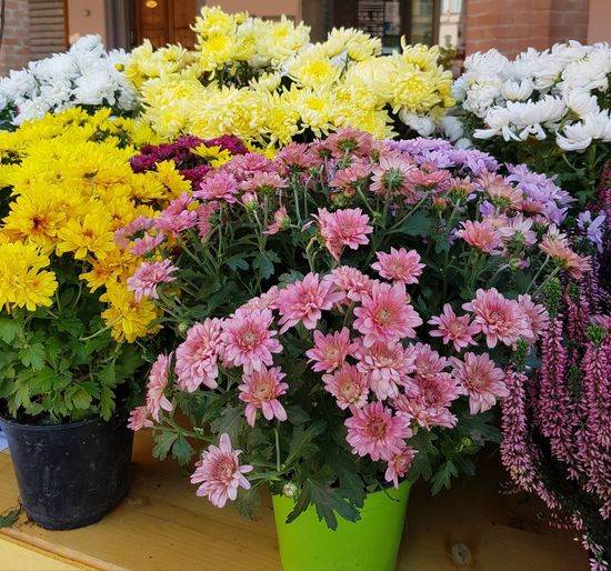 Close-up of fresh flowers in pot