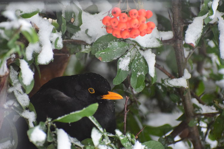 Close-up of a bird on snow covered plants