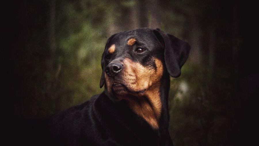 Hope ©️JaniVauhkonen Dog Pets Domestic Animals One Animal Animal Themes Portrait BestofEyeEm Best Shots EyeEm JaniVauhkonen EyeEm LG G4 BeastgripPro