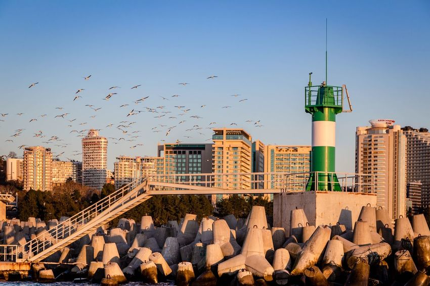 Breakwaters Lighthouse Sky Built Structure Architecture Nature Building Exterior Clear Sky No People Day Bird Vertebrate Tower Group Of Animals Flying Sunlight Outdoors Animals In The Wild Building Tall - High