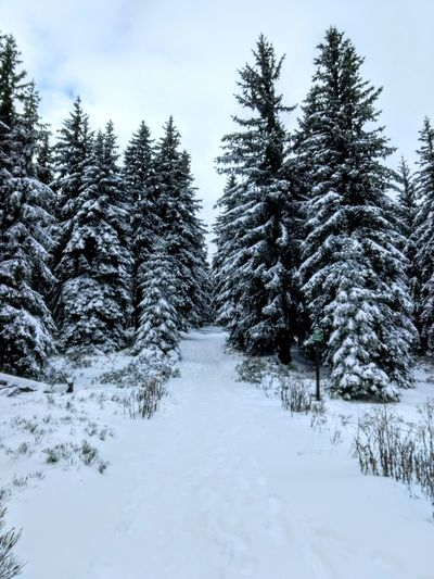 Snow Mountains Forest Cold Temperature Winter Pine Tree Tree Nature No People Tranquil Scene Beauty In Nature Mountain Outdoors Snowing Scenics Špindlerův Mlýn Czech Republic Spindlermühle Medvedin Hiking Freezing Cold Cold Wheather