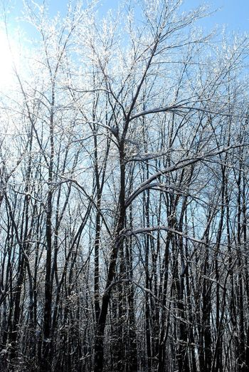 Ice Nature Winter Winter Storm Bare Tree Beauty In Nature Day Forest Ice Storm Icy Branch Icy Trees Nature Outdoors Sky Winter
