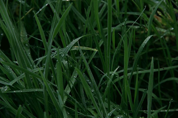 EyeEm Market © EyeEm Masterclass EyeEm Nature Lover EyeEm Selects EyeEm Gallery Morning Backgrounds Beauty In Nature Canon Canonphotography Close-up Day Detail Drop Field Freshness Full Frame Grass Green Color Growth Nature No People Outdoors Plant Water