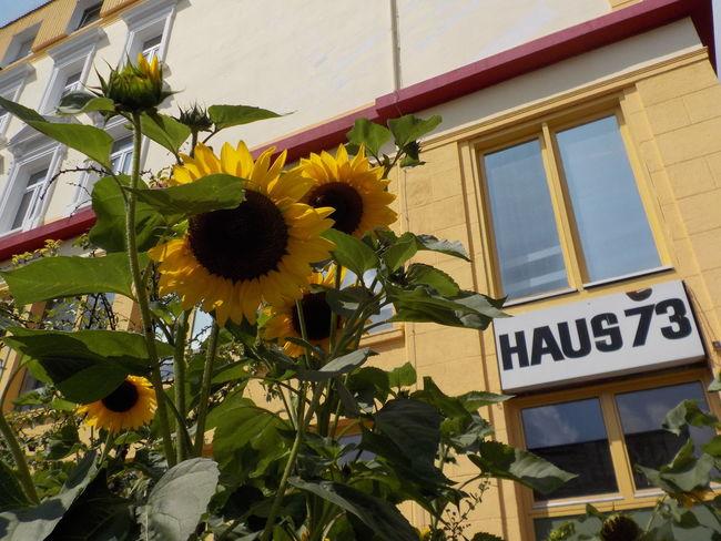 Club Daylight Deutschland Girassol Hamburg Haus 73 Sonnenblume Sunflower