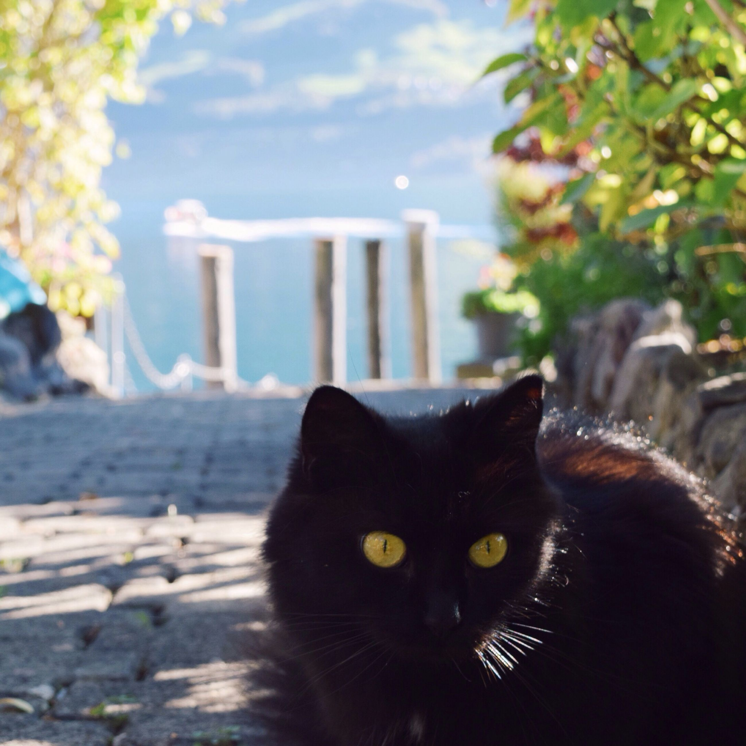 domestic cat, pets, animal themes, one animal, cat, mammal, domestic animals, feline, focus on foreground, whisker, portrait, looking at camera, close-up, black color, sitting, relaxation, day, no people, outdoors