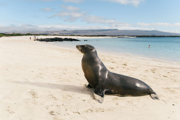 High angle view of sea lion on beach