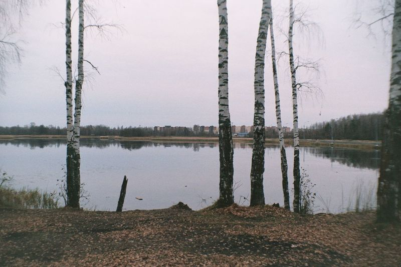 Analogue Photography Colors Film Beauty In Nature Color Negative Cozy Day Film Photography Filmcamera Filmphotography Fujifilm Fujifilm C200 Lake Nature Nature_collection No People Outdoors Reflection Tree Vilia Water