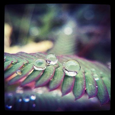 Water Drop July Rainy season Narcoticphotography yangondreamentertainment burma myamar yangon