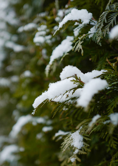 Snow ❄ Winter Bayern Beauty In Nature Branch Close-up Cold Temperature Day Fragility Frozen Green Color Growth Leaf Nature No People Outdoors Pine Tree Snow Snowflake Tree Weather White Color Winter