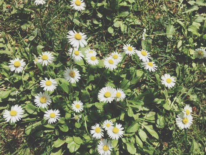 Flower 🌺 Love ❤️