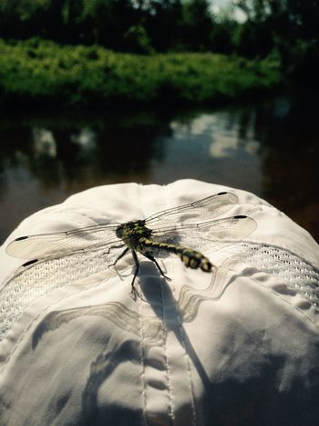 Fashion New Fashion This Is Aging EyeEmNewHere Animal Themes Animal One Animal Invertebrate Animal Wildlife Insect Animals In The Wild Close-up Water Nature Outdoors Animal Wing Focus On Foreground Day Animal Body Part Plant Marine