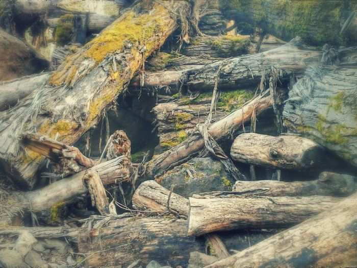 Outdoors Nature Close-up Photography Driftwood Trees Logs Pile Logging Trees Logging Site Dead Tree Pile Of Wood Piles Of Wood