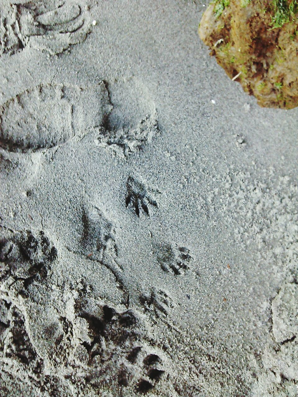 footprint, beach, sand, day, high angle view, animal track, outdoors, paw print, no people, nature, track - imprint, close-up, animal themes
