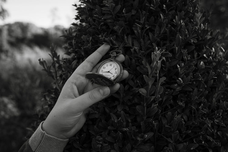 Cropped hand holding pocket watch by plant