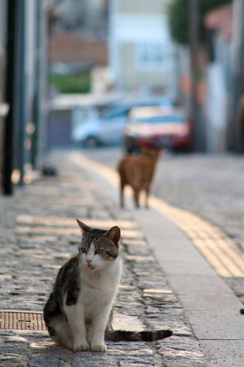 View of a cat looking away on road