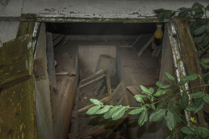 Abandoned Close-up Day Indoors  Leaf No People Plant The Still Life Photographer - 2018 EyeEm Awards