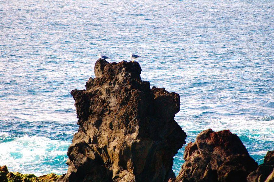 Sea Birds Ponta Delgada Portugal Azores, S. Miguel Mosteiros, Azores Rocks Rocks And Water