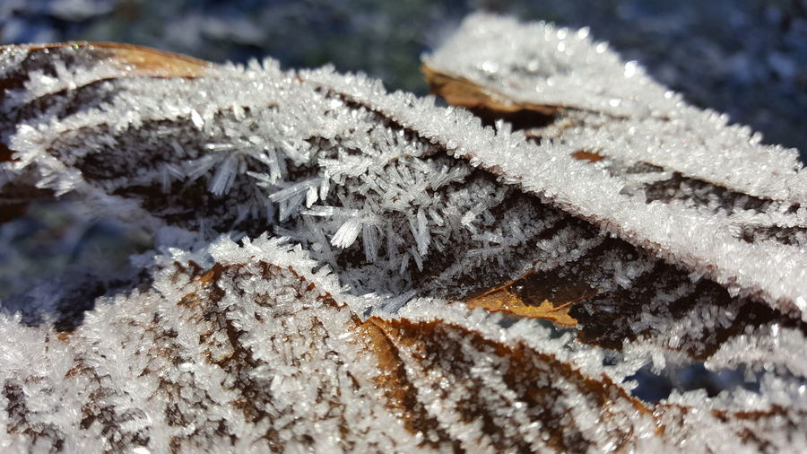 Winter Cold Temperature Close-up Outdoors Beauty In Nature Nature Iced Leaf Kristals Eiskristalle Its Cold Outside