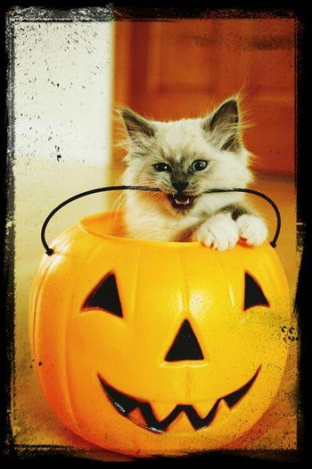 Enjoying Life Cat♡ Fofis:-)