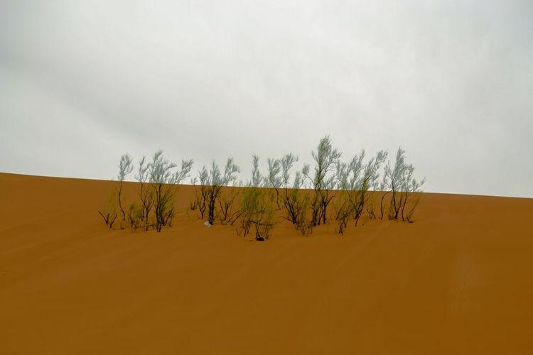 Sky Plant Landscape Scenics - Nature Tree Environment Tranquility