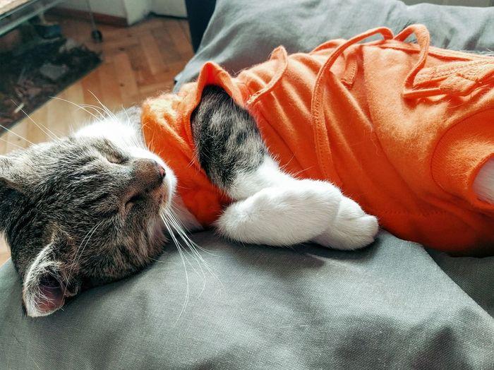Sygin Orange Color Hello World Nexus5photography Nexus5x
