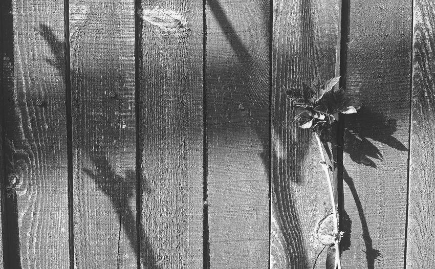 No People Nature EyeEm Best Shots - Black + White Black&white Black & White BW Collection BW Transcience Textured  черно-белое черно-белое фото Чб чбфото чбфотография чернобелоефото