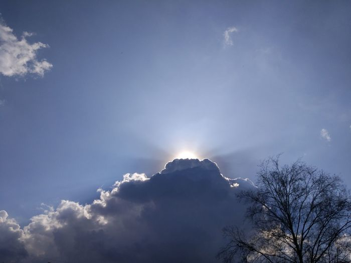 Sky Cloud - Sky Low Angle View Beauty In Nature Nature Sunbeam Sunlight No People Blue Scenics - Nature Tree Tranquility Sun Outdoors Tranquil Scene Day Idyllic Cloudscape Heaven Lens Flare Treetop Bright Luminosity Meteorology