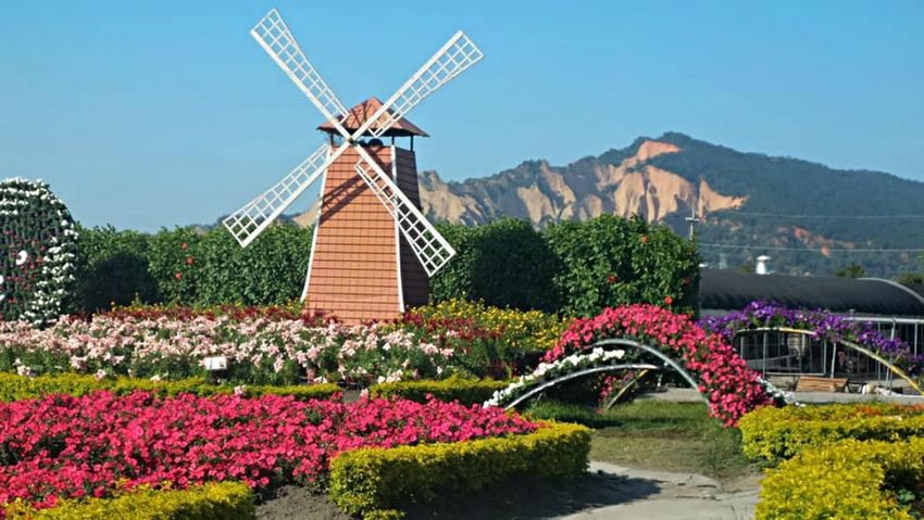 Flower Farm Farm Mountain View Beauty In Nature Clear Sky Flower Houlihans Nature No People Outdoors Scenics Sky Windmill #urbanana: The Urban Playground