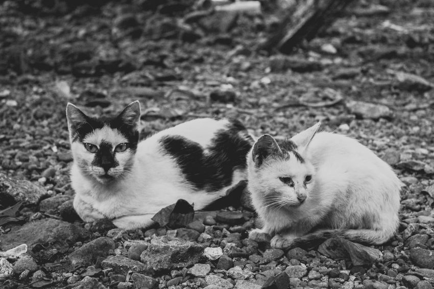 Black And White Friday Animal Themes Pets Two Animals Animal Looking At Camera Mammal Portrait Domestic Animals
