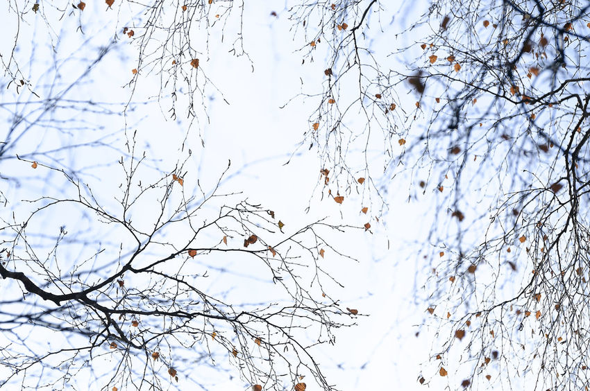 Werdensteiner_Moos_2018_11_11924 Tree Low Angle View Sky Plant Bare Tree No People Day Nature Cold Temperature Clear Sky White Color Lines Lines And Shapes Autumn Autumn colors Autumn Leaves Outdoors