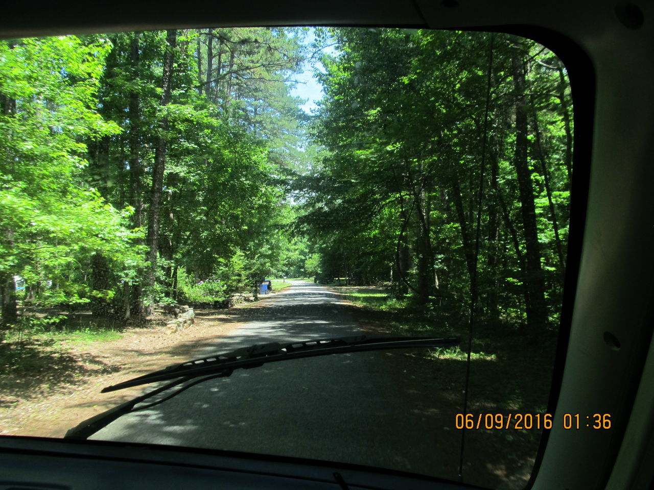 car, transportation, tree, land vehicle, mode of transport, windshield, window, day, car interior, no people, nature, outdoors
