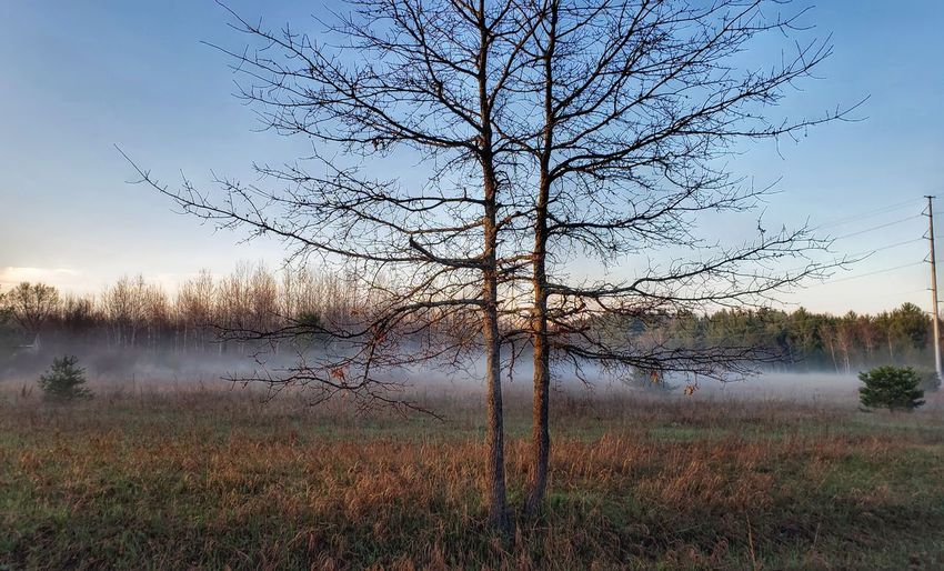 Bare tree on field by lake against sky
