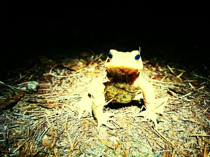 The Magic Mission Frog Froggy Style