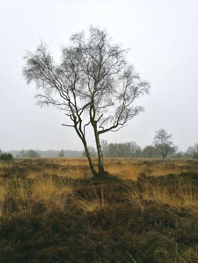 Nature Tree No