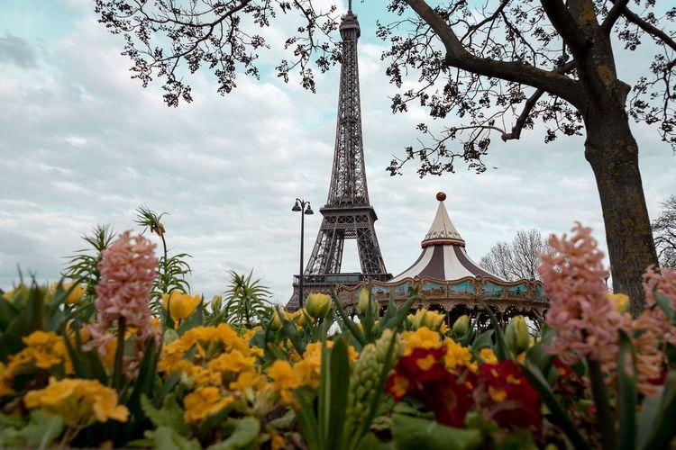 Eiffel tower Flower Flowering Plant Architecture Plant Built Structure Sky Tower Travel Destinations City Beauty In Nature Tourism