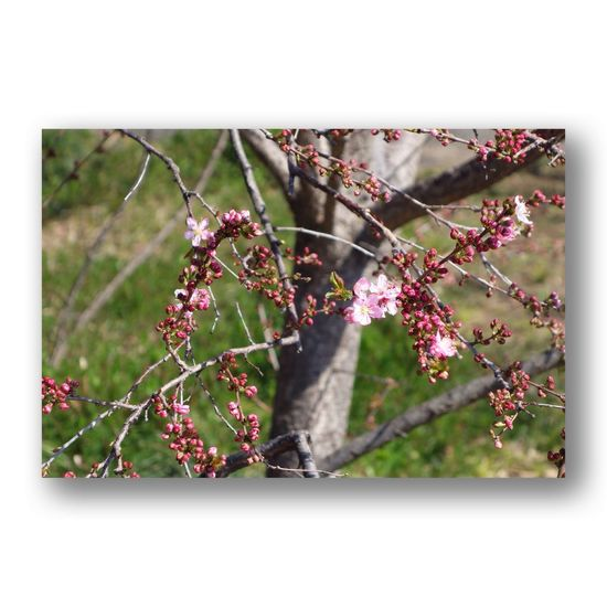 Plum No People Plant Red Day Nature Close-up Outdoors Growth Freshness