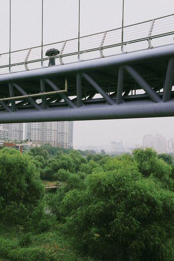 Urban Nature Bridge