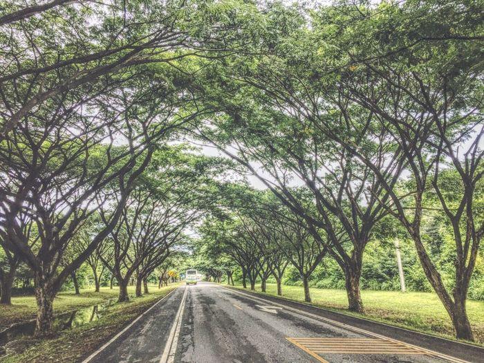 Car Road Street