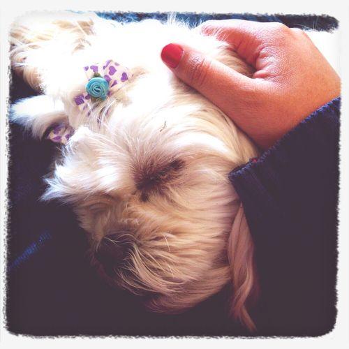 How My Dog Sleeps So Cute My Chica  Hehe