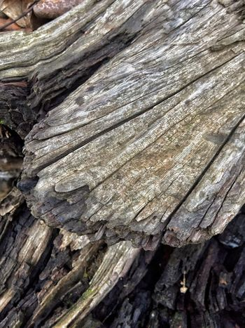 Scenery Surfaces And Textures Driftwood Textured  Full Frame Backgrounds Pattern Wood - Material No People Day Close-up Rough Nature Natural Pattern Tree Outdoors Wood Sunlight Bark Log Land
