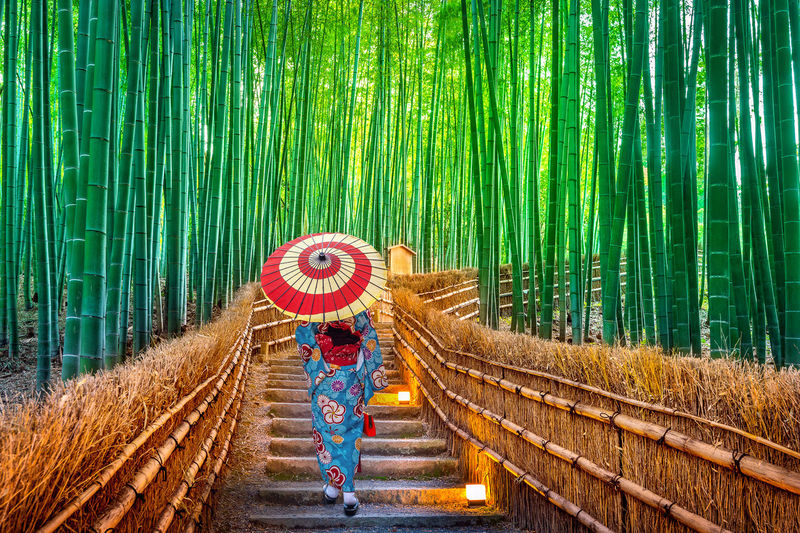Rear view of mid adult woman with umbrella walking on steps amidst bamboo trees in forest