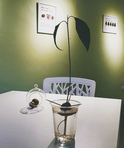 An Avocado Plantation, 2018 EyeEm Selects Avocado Avocado Love ♥︎ Avocado Plant Avocado Seed Avocado Place Avocado Cafe Avocado Space Green Avocado Green 2018 Drinking Glass Table Electric Lamp Electric Light Side Table