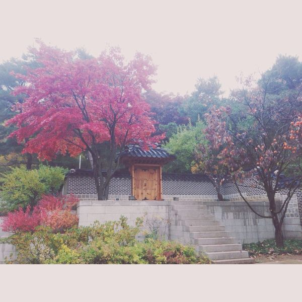 Autumn in Korea