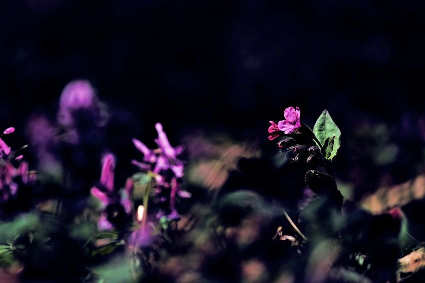 Spring Springtime Spring Flowers Spring Colours Spring Photography Spring Is In The Air Flower Flowers_collection Beauty Of Nature Beauty In Nature Flower Photography Beautiful Nature Nature Nature_collection Naturelovers Flower Collection