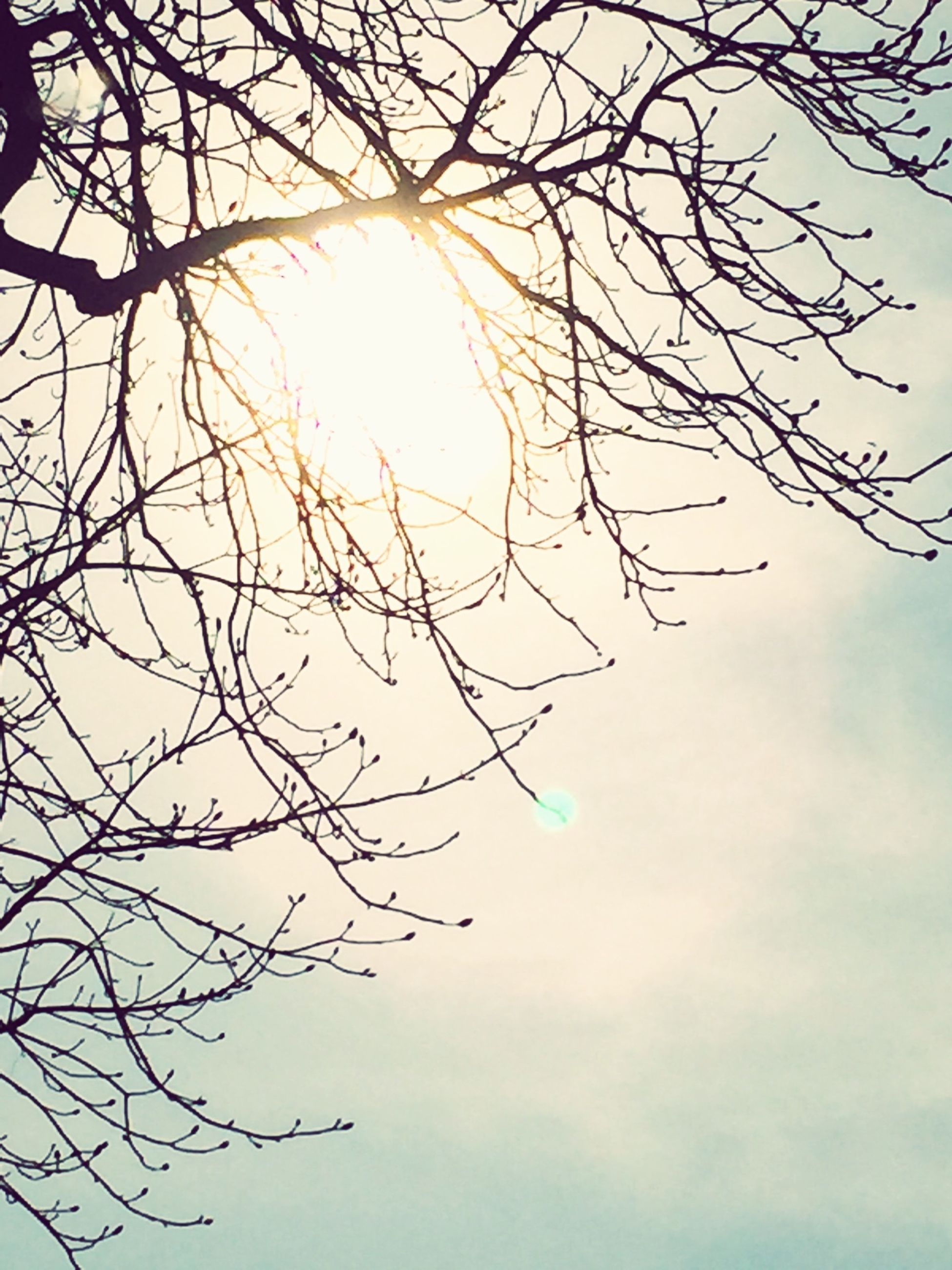 low angle view, branch, sun, bare tree, tree, sky, nature, beauty in nature, tranquility, silhouette, scenics, sunlight, sunbeam, cloud - sky, outdoors, tranquil scene, lens flare, day, no people, growth