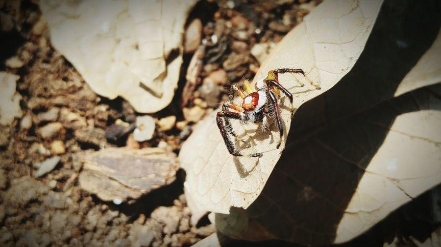 Great to capture spider First Eyeem Photo